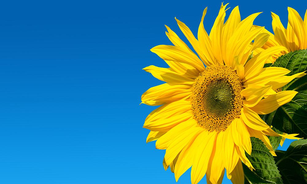 Sunshine will push temperatures into the 30s Celsius