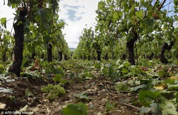 Cloud Seeding - Hail Protection For Vineyards