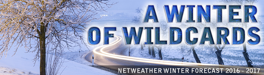winterwildcardsb.jpg