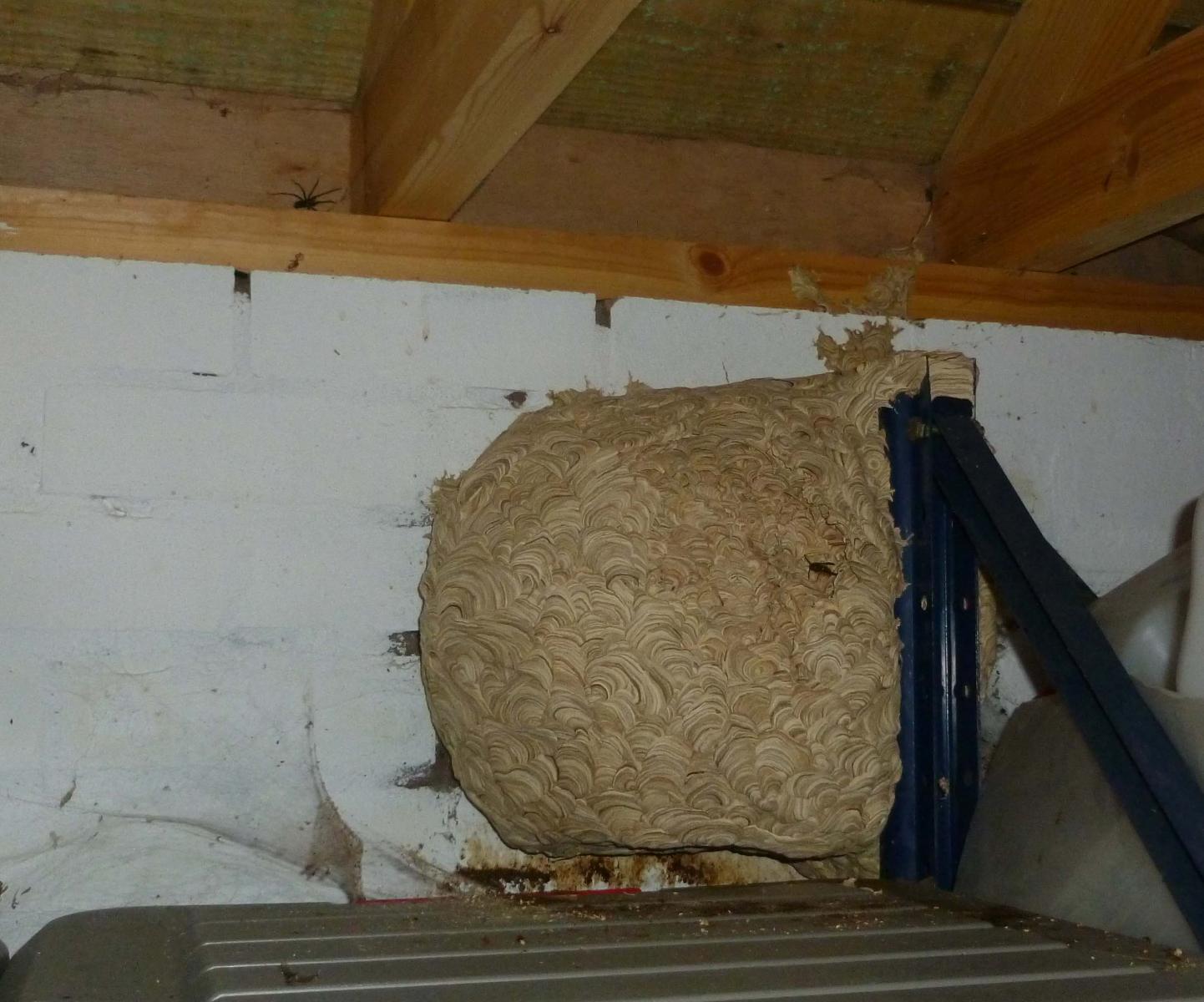 Large wasps nest