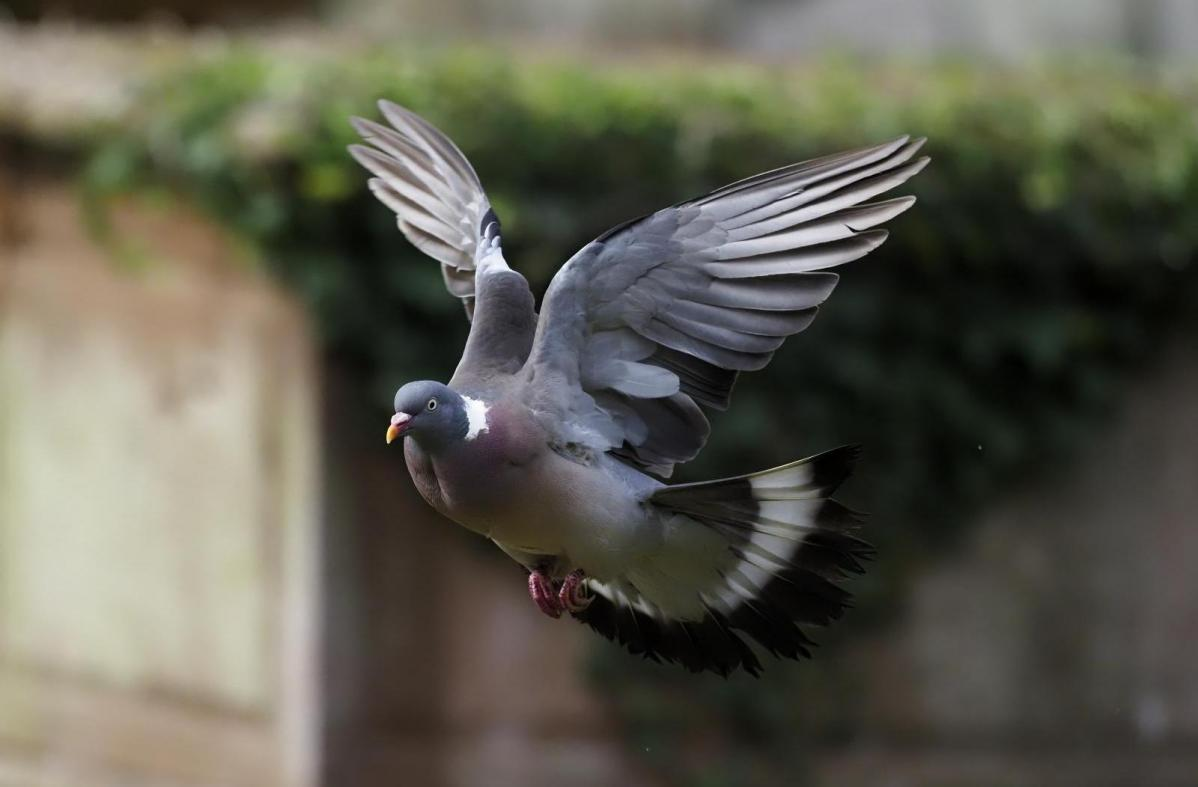 Some first weekend of Summer - even the pigeons don't fancy it