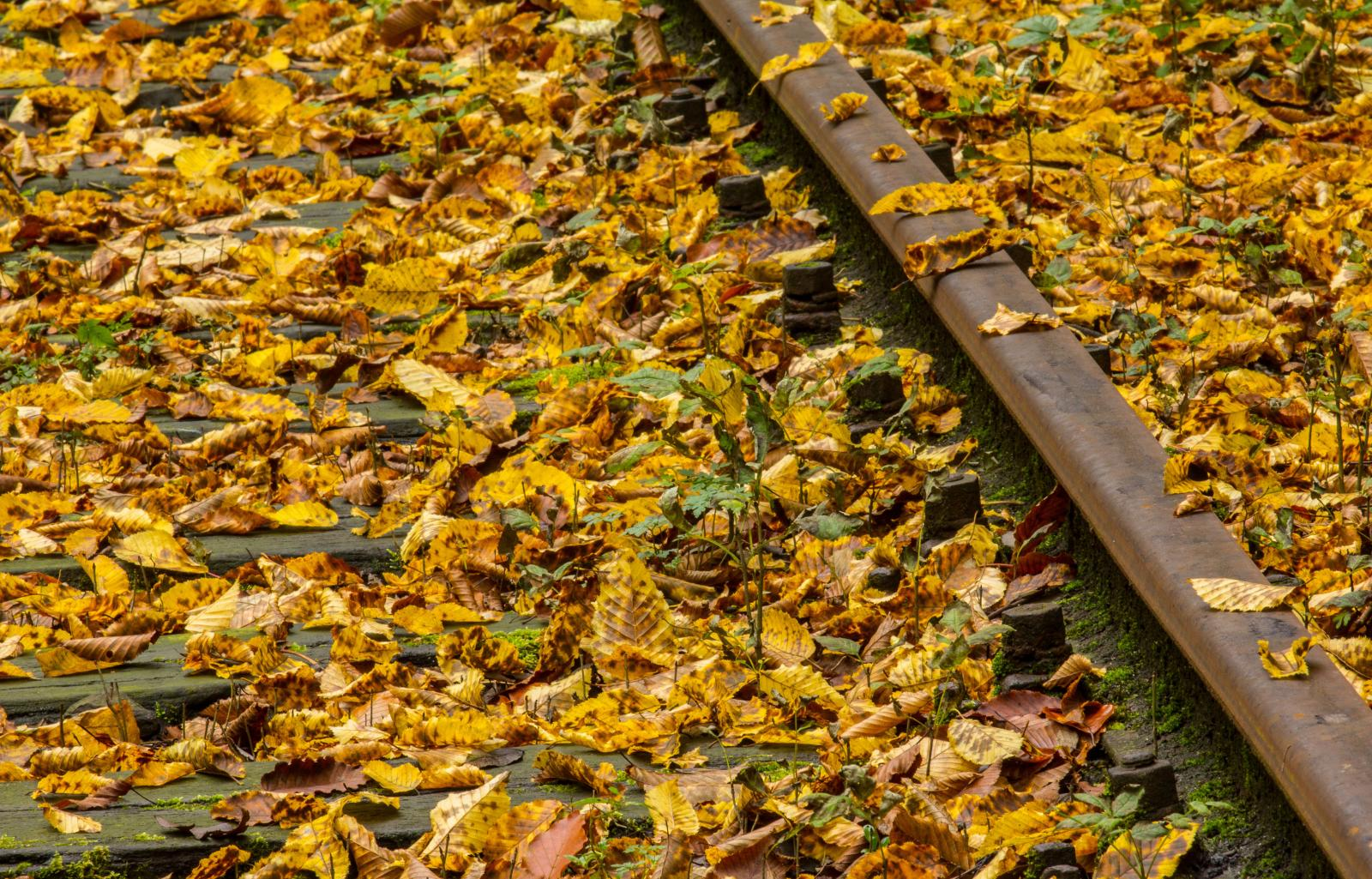 Train Delays: Leaves on the line, slippery rails and low adhesion