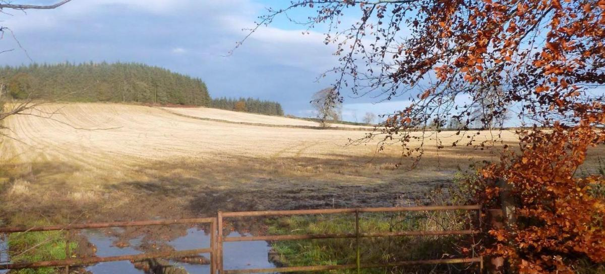 October was a wet and dull month, but signs of drier weather later in the week