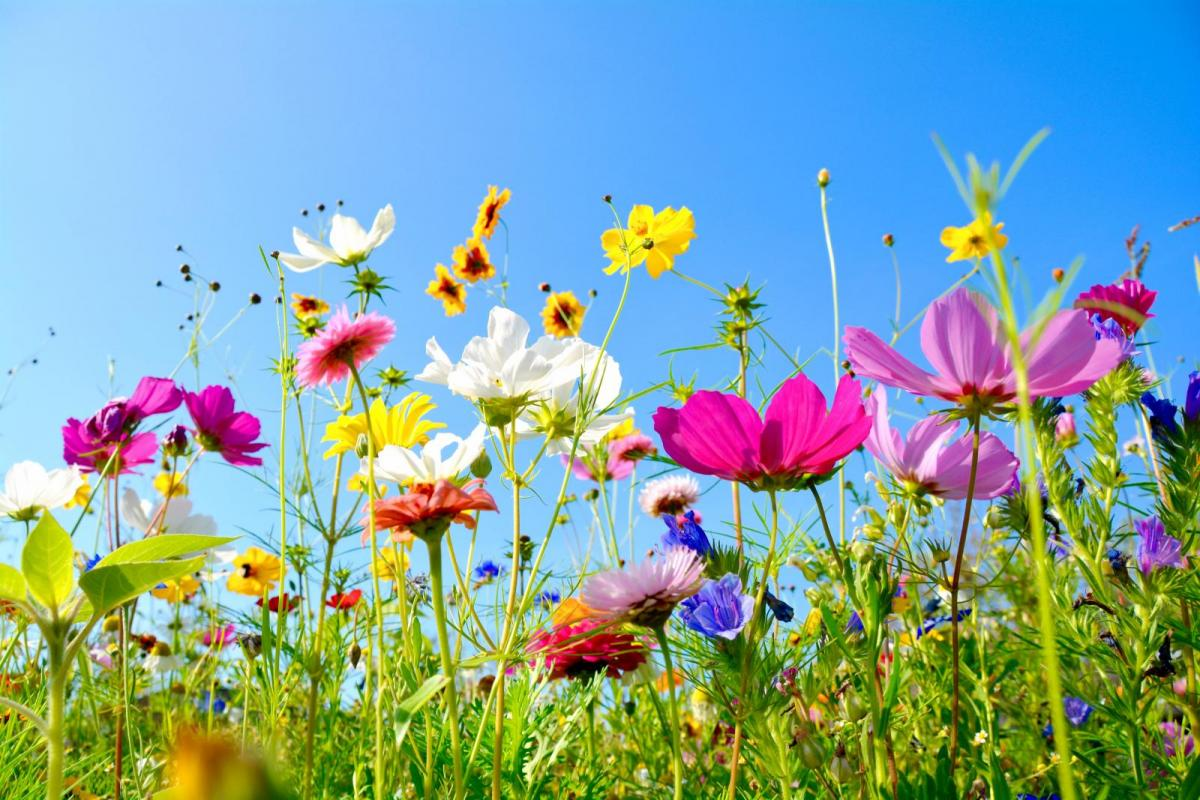 Hello Sunshine! Your Gardening Guide for June