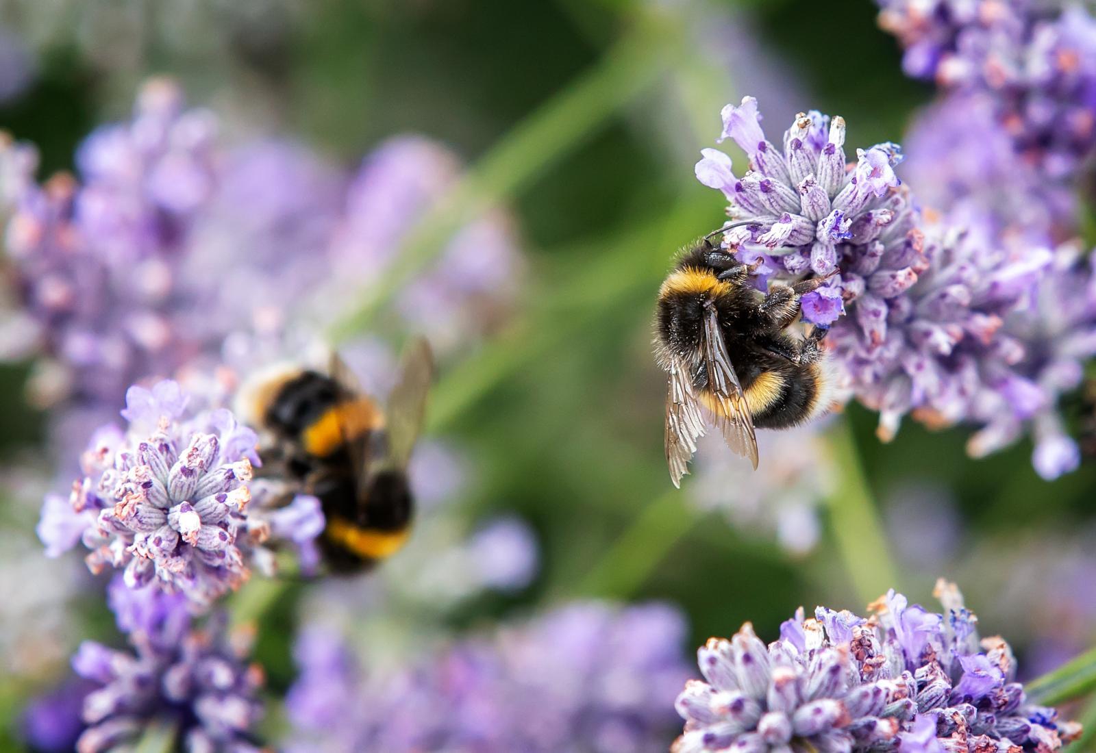 Get Your Garden Buzzing - Create a Bee-Friendly Garden This Spring!
