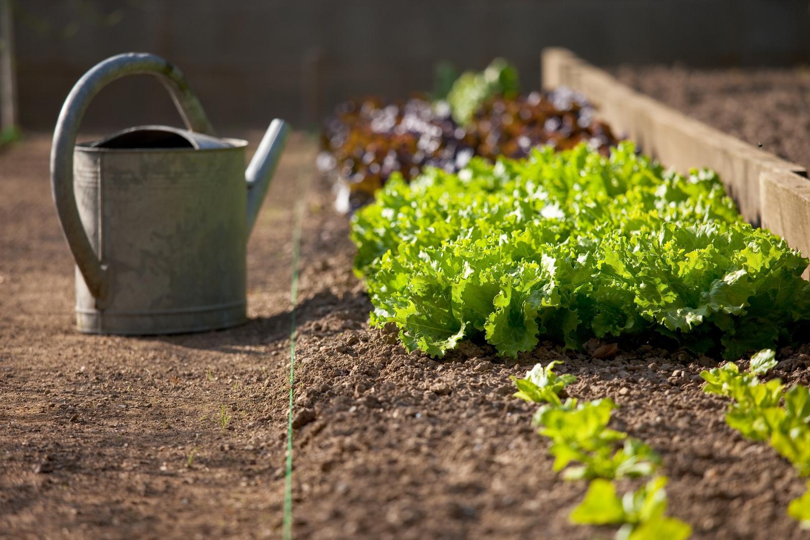 Sowing vegetables