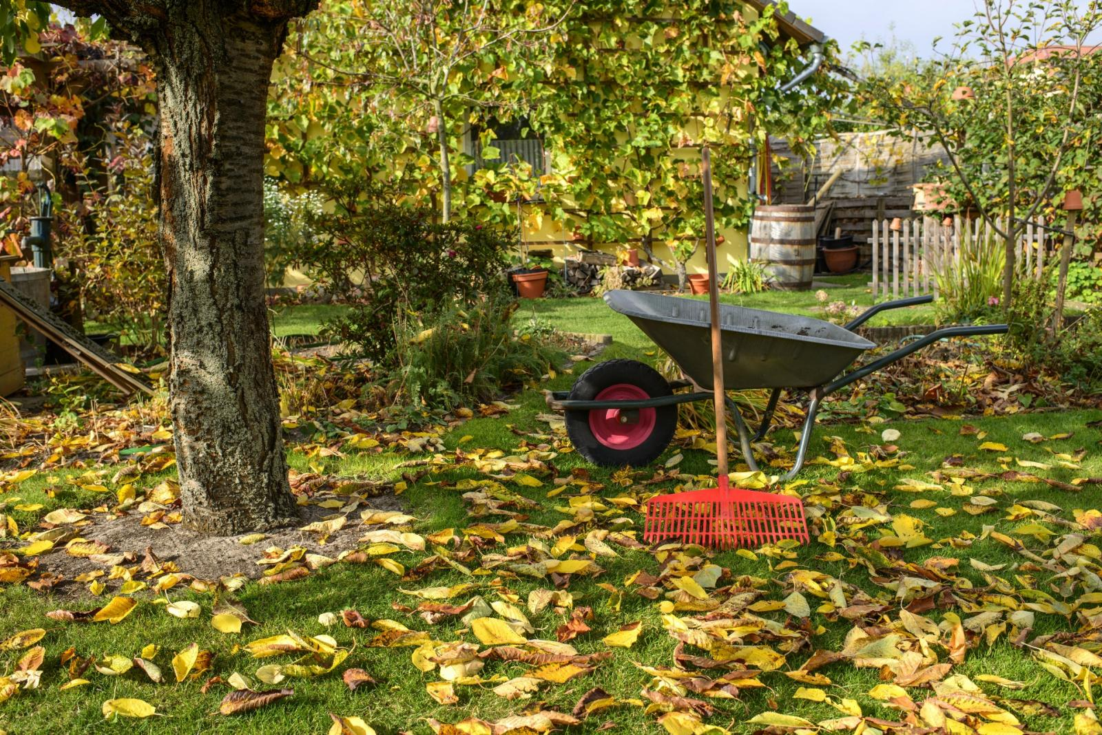 First Frosts and Another Lockdown: Your Monthly Gardening Guide for November 2020