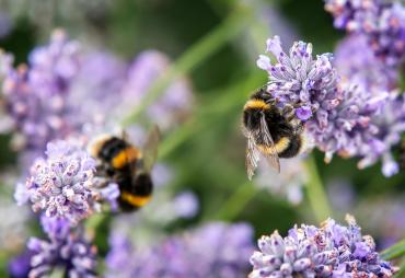 Get Your Garden Buzzing - Create a Bee-Friendly Garden This Spring!
