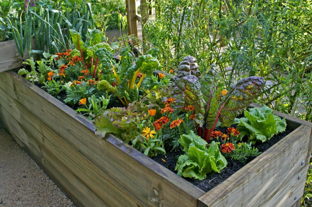 How to Create a Container Vegetable Garden