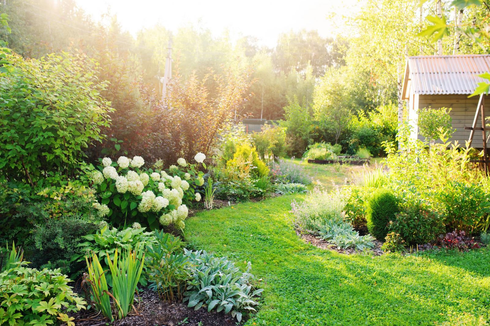A cottage garden with a variety of plants and flowers