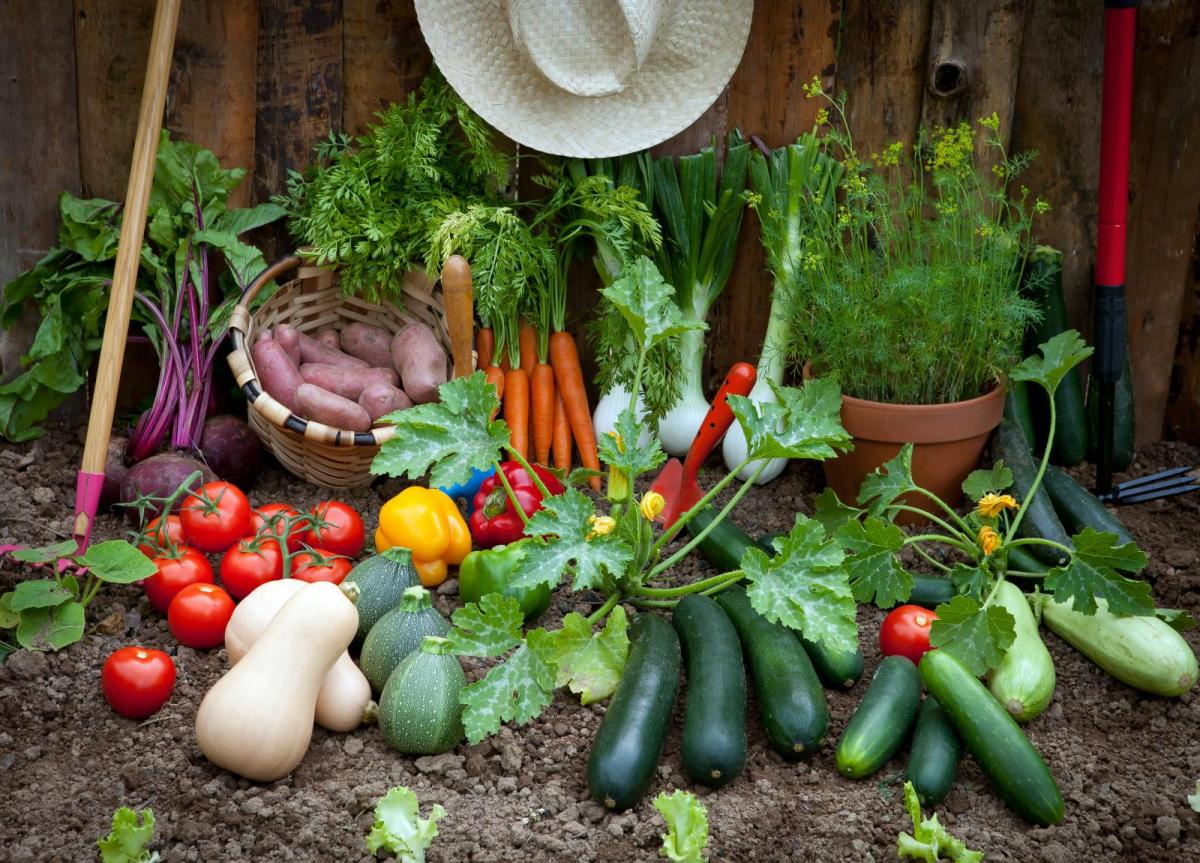 Courgettes and Cucumbers: Your Monthly Gardening Guide for August