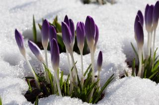 Preparing for Spring: Your Monthly Gardening Guide for February