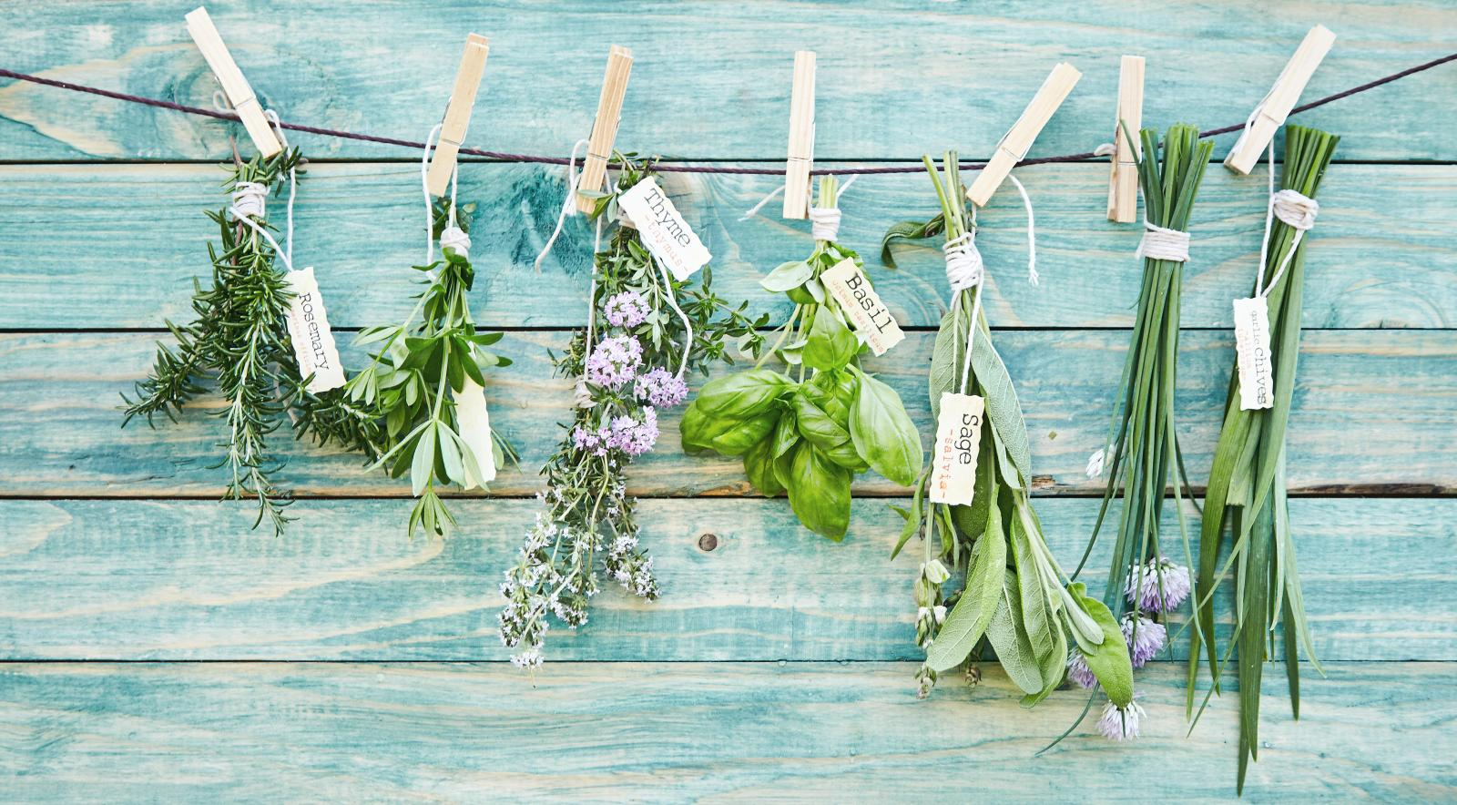 Cutting and hanging herbs to dry