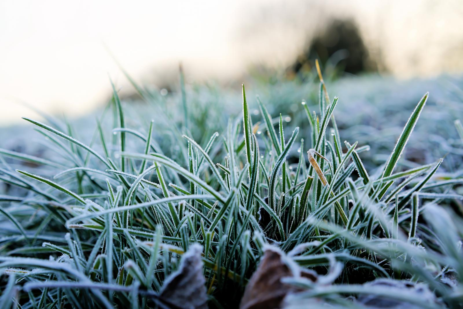 Avoid walking on frosty lawns