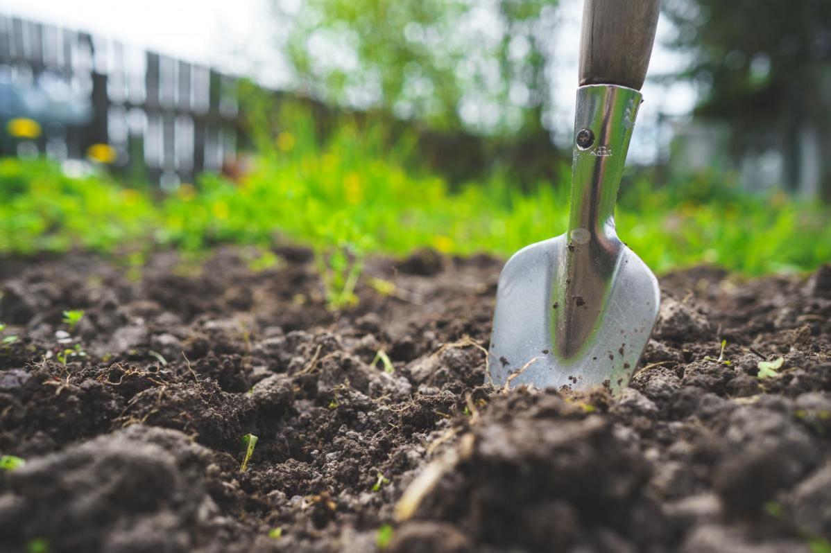 Lockdown Gardening - Top Tips for New Gardeners