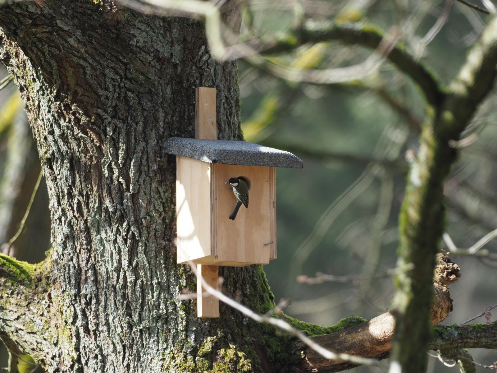 Nesting box for the birds
