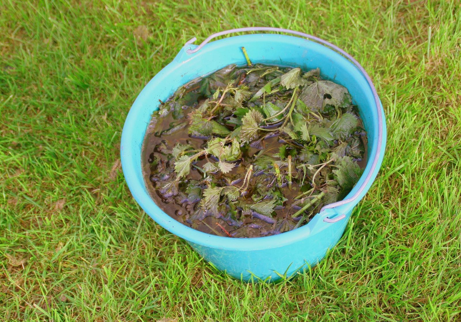 Nettle liquid manure