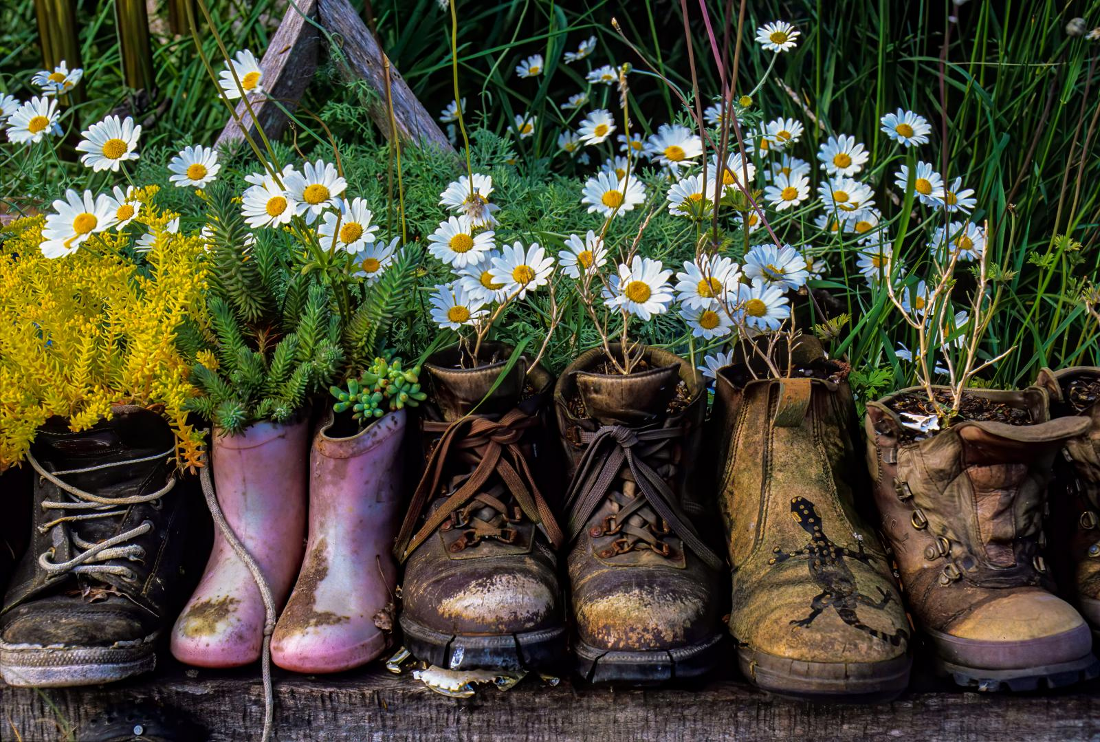 Recycled boots as planters
