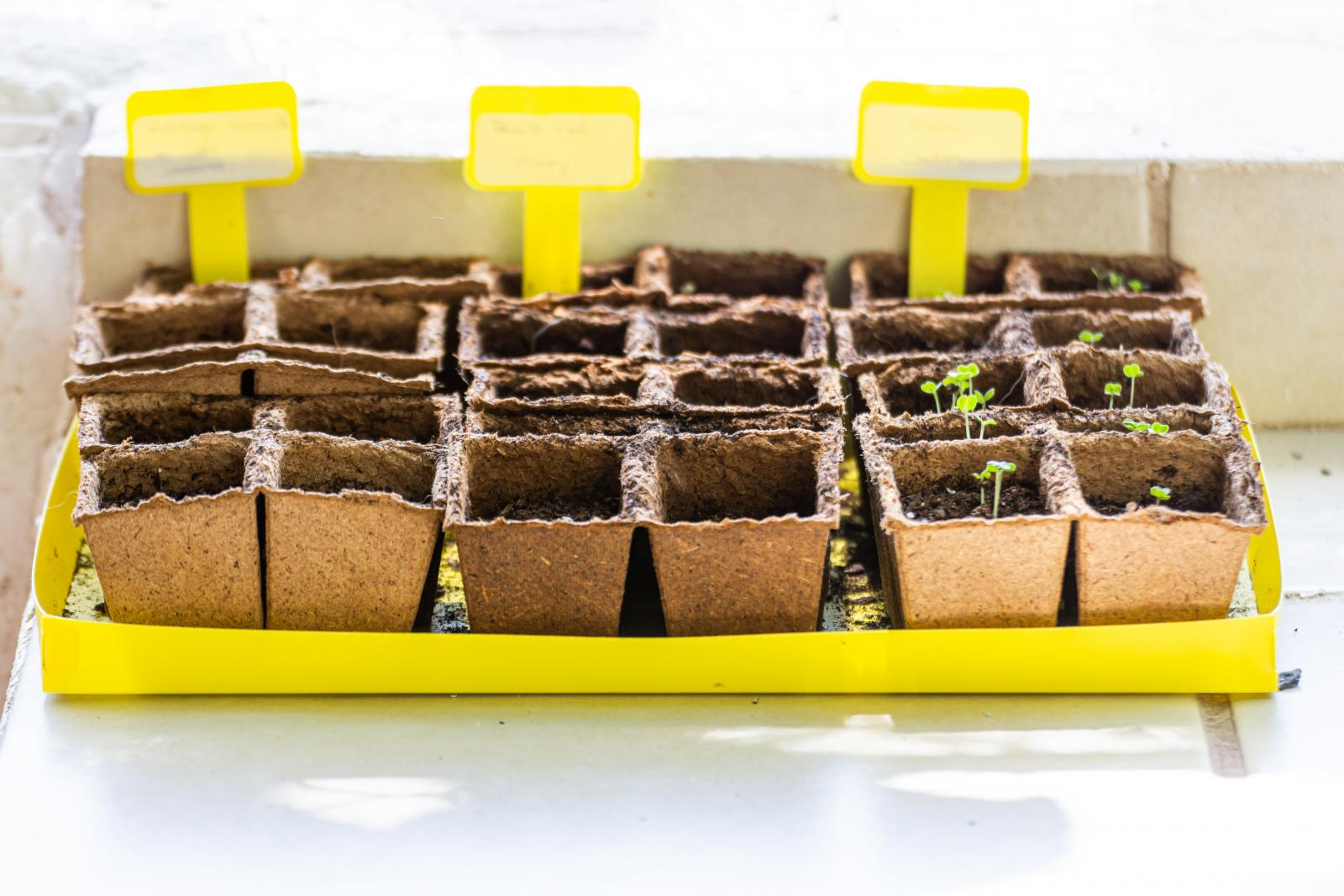 Recycled egg boxes as growing containers