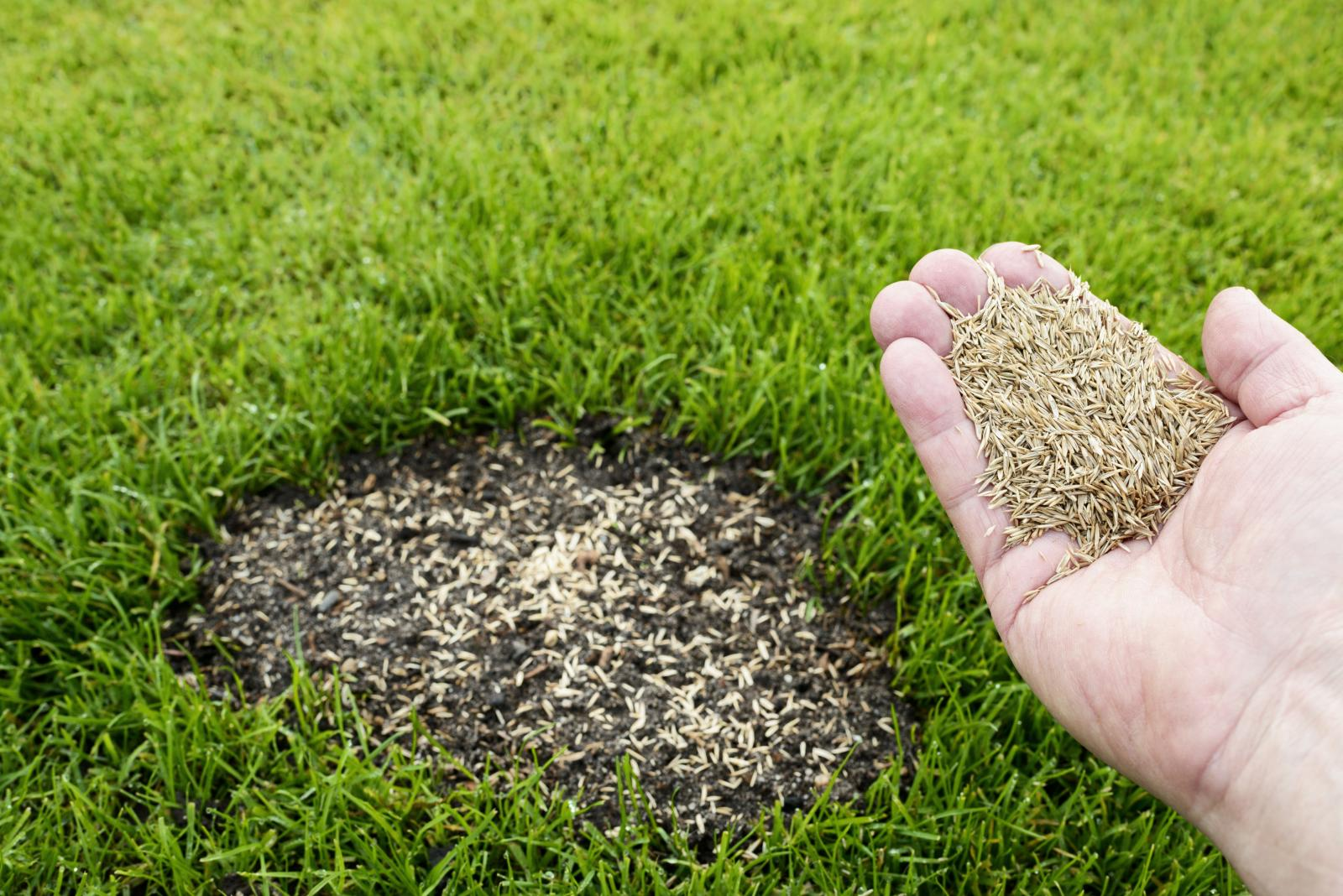 Repair Lawn