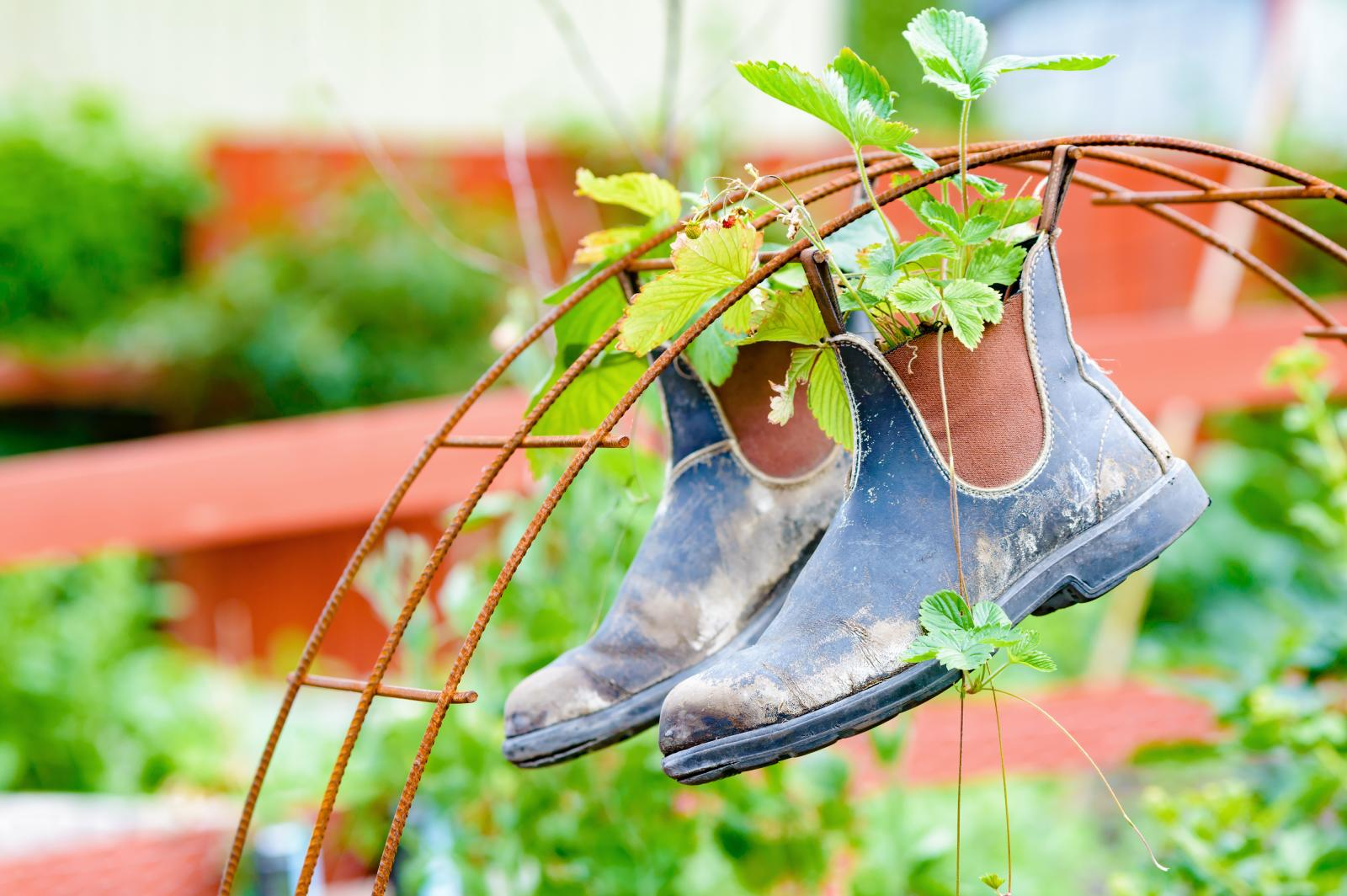 How to Be a Thrifty Gardener: 10 Tips for Gardening During Lockdown