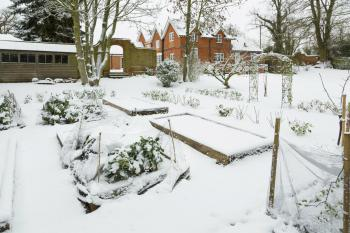 A New Year in the Garden: January's Lockdown Gardening Guide