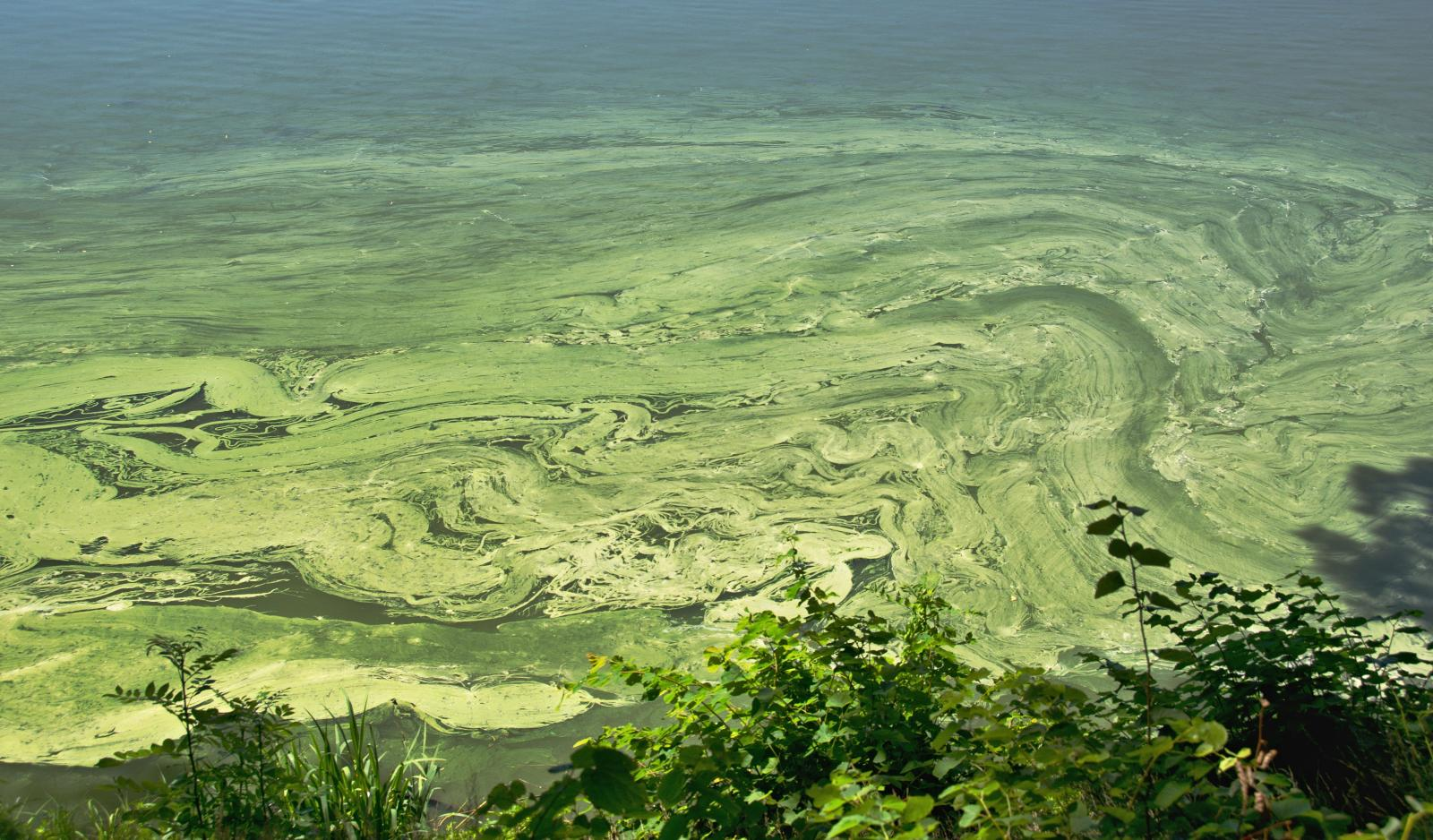 Blue Green Algae warnings after the UK summer heat and dry spell