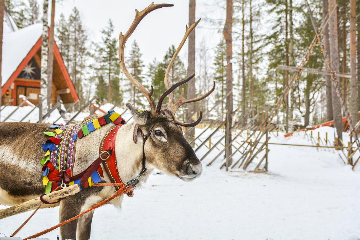 How is the Lapland snow? There has been a little in the past week but what about December?