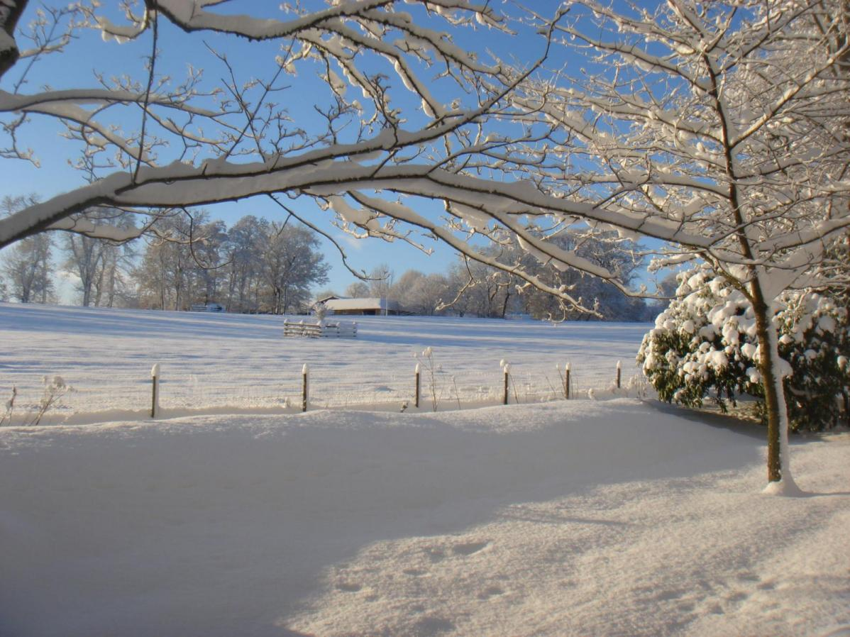 UK Weather : Any signs of cold,  deep winter and heavy snow as February progresses?