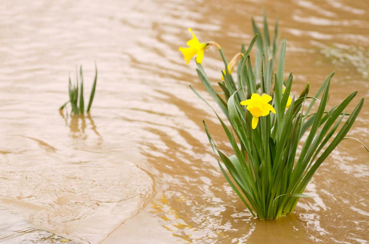 Warm sunshine as change to Atlantic wind and rain sees melting snow and flood risk