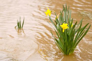 February fortunes, even more rain or warmth?