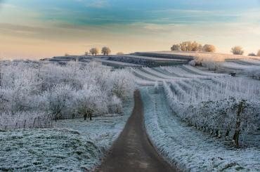 Cold waves hitting Europe continue to threaten growers, is there a link to climate change?