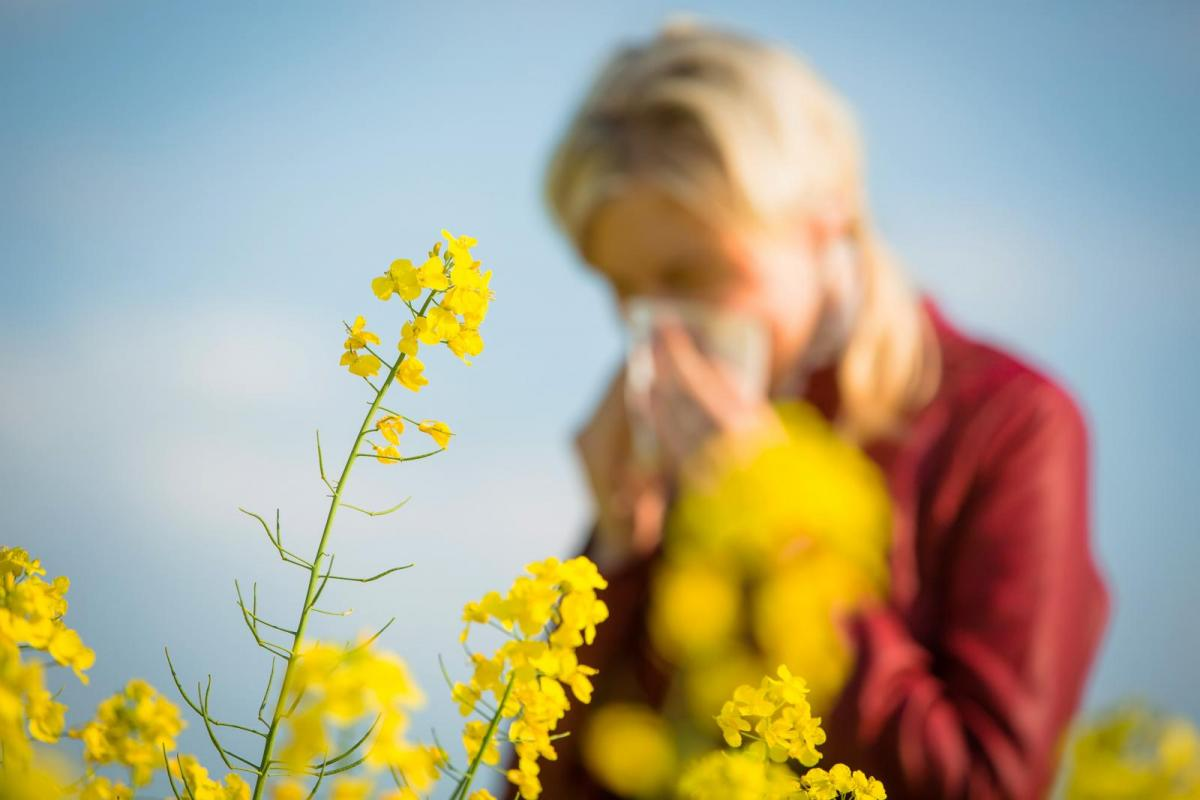 Hayfever season: How the weather affects the pollen count