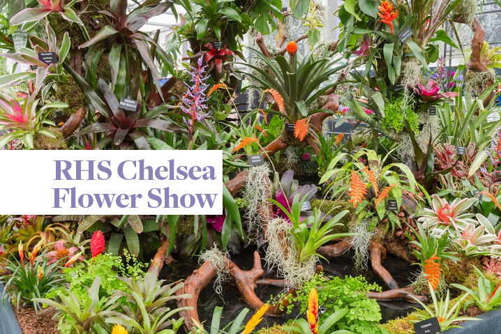 RHS Chelsea Flower Show 2018, warm and hopefully dry