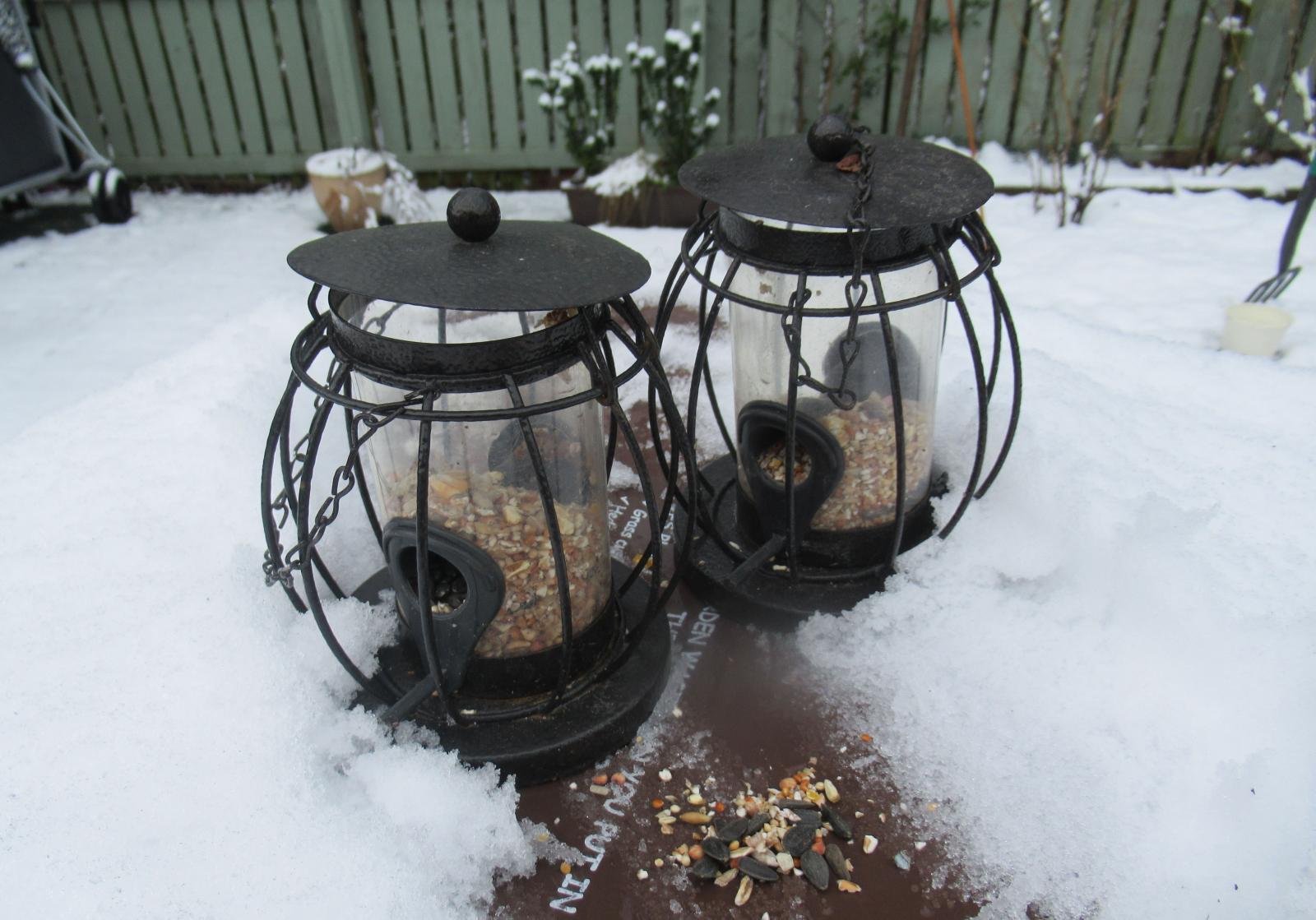 Bird feeding in snow