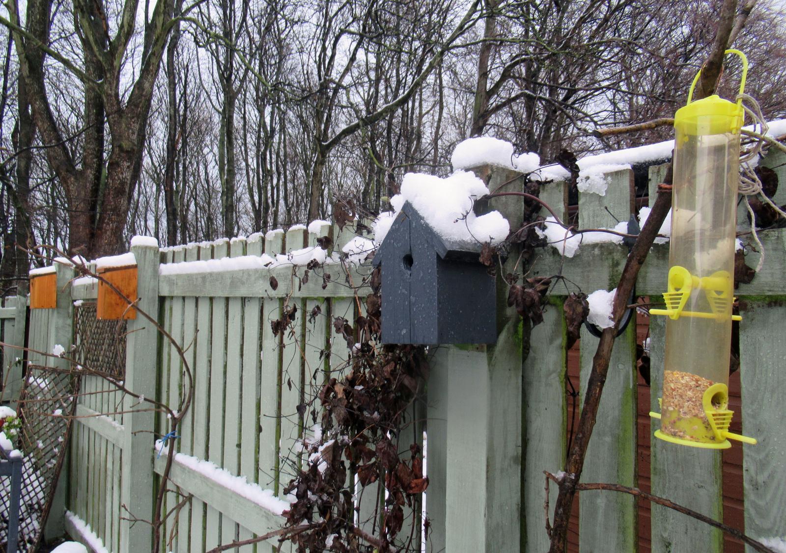 Nesting boxes birds UKweather