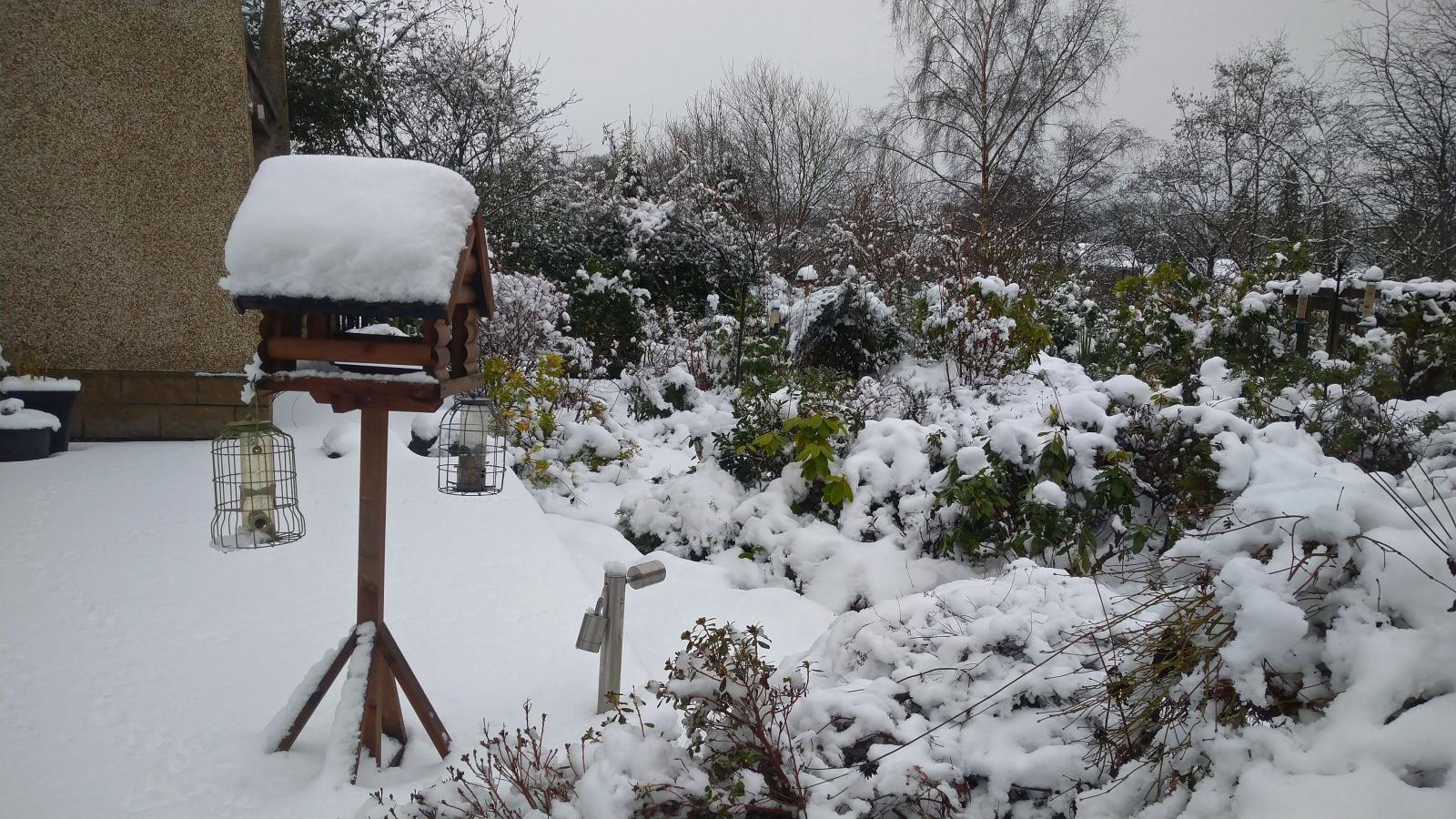 squirrel proof bird feeders in snow