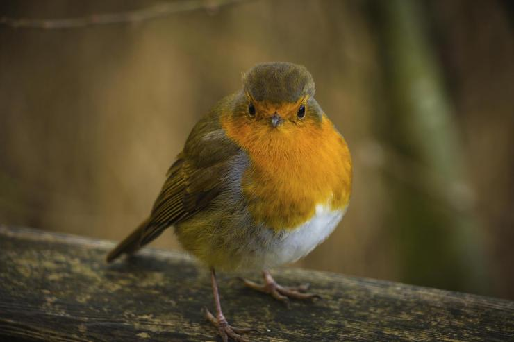 What about the birds in this snow and ice? Big Garden Birdwatch to end to January